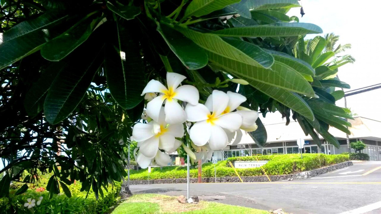 ironman-hawaii-2.jpg